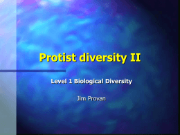 Protist diversity I