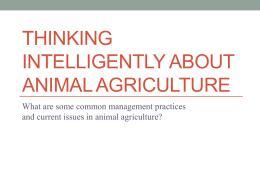 Thinking Intelligently About Animal Agriculture
