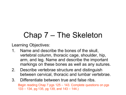 Chap 7 – The Skeleton