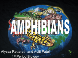 Amphibian PowerPoint 2 as ppt