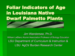 Foliar Indicators of Age in Dwarf Palmetto
