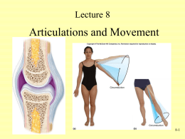 Articulations and Movement