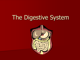 Digestive System - Science