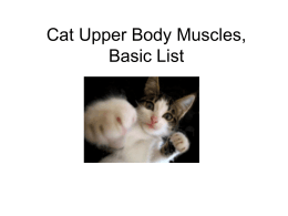 3b Mt SAC Cat Upper Body muscles, basic