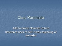 Class Mammalia lecture for web