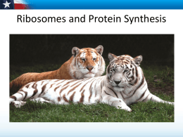 Protein Synthesis for Students