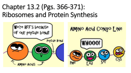 Chapter 13.2-Ribosomes and Protein Synthesis