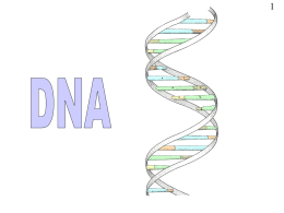 DNA . ppt - Biology Resources