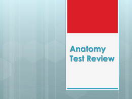 Anatomy Test Review