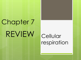 IIS1 Chapter 7- cellular respiration REVIEW