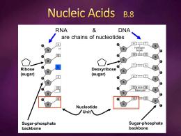 Nucleic Acids B.8