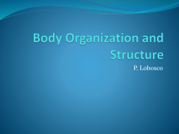 Body Organization and Structure Chapter 22