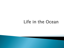 Life in the Ocean - Baptist Hill Middle/High School