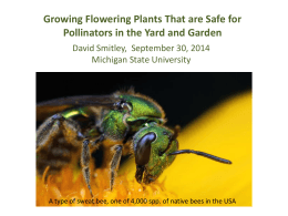 Growing flowering plants that are safe for pollinators in the yard and