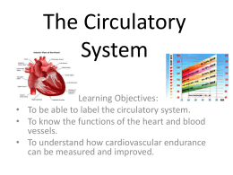 The Circulatory System - St John`s, Marlborough