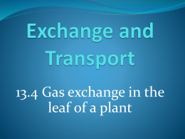 13.4 - Gas Exchange in the Leaf of a Plant