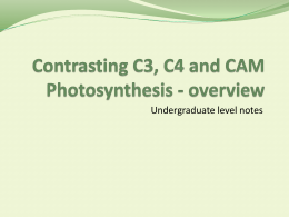 Contrasting C3, C4 and CAM Photosynthesis