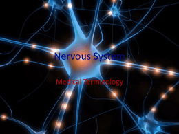Nervous System - Grand Saline ISD