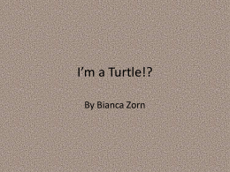 I`m a Turtle!.