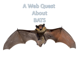 A Web Quest About BATS