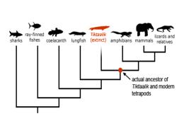 AP evolution of life