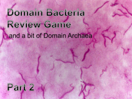 Bacteria_Review_Game..