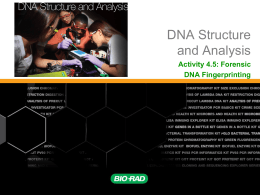 Activity 4.5: Forensic DNA Fingerprinting