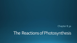 The Reactions of Photosynthesis