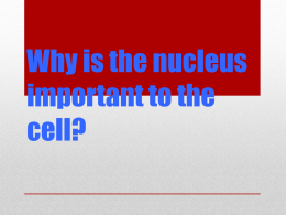 Why is the nucleus important to the cell?