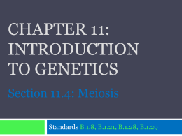 CHAPTER 11: Introduction to genetics Section 11.4: Meiosis