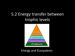 5.2 Energy transfer between trophic levels