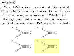 DNA practice questions