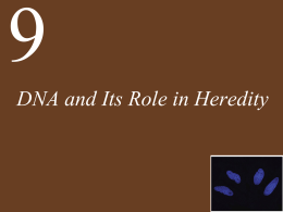 Ch09 Lecture-DNA and Its Role in Heredity