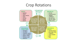 Crop Rotations - Groundswell Community Farm