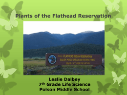 Plants of the Flathead Reservation