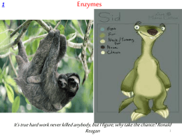 Enzymes - WordPress.com