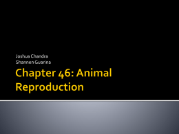Chapter 46: Animal Reproduction