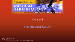 Muscular System PowerPoint ch 4