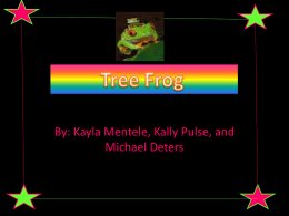 What cells are red eye tree frog have