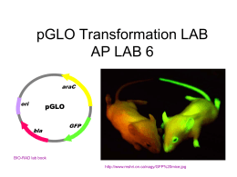 PGLO Transformation LAB AP LAB 7
