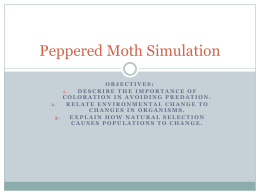 Peppered Moth Simulation