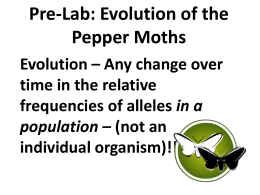 Evolution of the Pepper Moths
