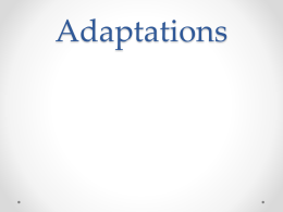 Notes Adaptations File