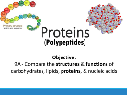Protein and Enzyme Notes -website