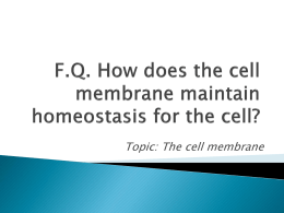 F.Q. How does the cell membrane maintain homeostasis for the cell?