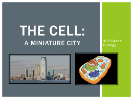 The Cell: A Miniature City