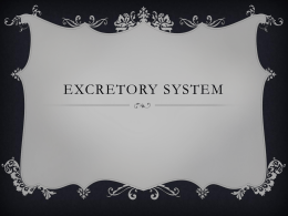 Excretory system - Science Done Wright