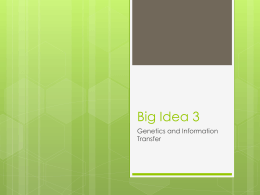 Big Idea 3 - tasokapbiology