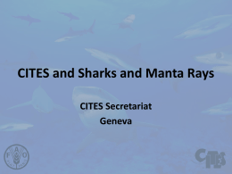 CITES and Sharks and Manta Rays