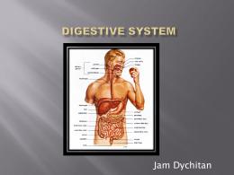 Digestive System - 814 E
